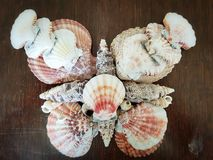 Shell butterfly. Beautiful selection of unusual seaside shells placed in the style of a butterfly on a wooden background Stock Photography