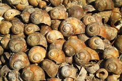 Shell carcass background Royalty Free Stock Images
