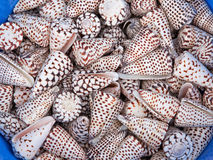 Shell Case Cones Stock Image