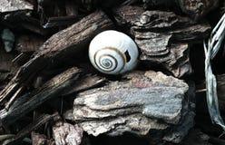 Shell cassé caché des rêves Photo libre de droits