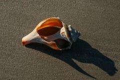 Shell cassé sur Sandy Beach images stock