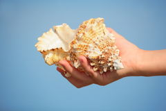 Shell in child's hand. focus on little finger Royalty Free Stock Image