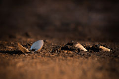 Shell clamp land of drought seasons Stock Photography