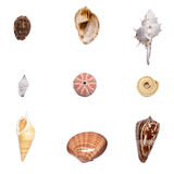 Shell collection. Collection of nine different shells Royalty Free Stock Photos