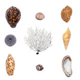 Shell collection. Collection of nine different shells Royalty Free Stock Photography