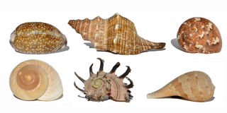 Shell Collection photographie stock