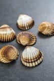 Shell Collection photos stock