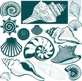 Shell Collection Royalty Free Stock Image