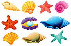 Shell collection Royalty Free Stock Images