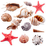 Shell collection, isolated. Set of 12 different shells of marine mollusks and starfish, isolated Stock Photo