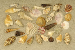 Shell collection in sand Stock Image