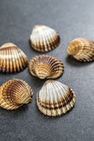 Shell collection. Stock Photos