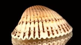 Shell colorido isolado em um preto, rotação do mar vídeos de arquivo