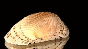 Shell colorido isolado em um preto, rotação do mar filme