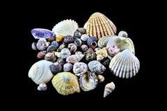 Shell coloridos Imagens de Stock Royalty Free