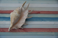 Shell on the coloured plank. Shell on the wooden colored plank Royalty Free Stock Image