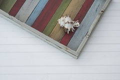 Shell on the coloured plank. Shell on the wooden colored tray Royalty Free Stock Image