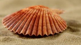 Shell com areia, fim do mar acima, rotação video estoque
