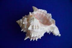 Shell com espinhos foto de stock royalty free