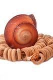 Shell com os grânulos de madeira no fundo branco Imagem de Stock Royalty Free
