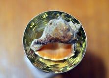 Shell como regalo imagenes de archivo