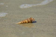 Shell con el cangrejo de ermitaño en la arena fotografía de archivo