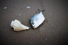 Shell con il pesce sulla spiaggia Fotografia Stock Libera da Diritti