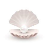 Shell con la perla dentro, su bianco Fotografia Stock Libera da Diritti