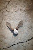 Shell con las alas Fotografía de archivo libre de regalías