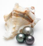 Shell con las perlas negras Foto de archivo