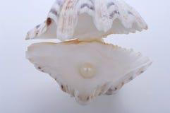 Shell con le perle Fotografie Stock