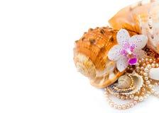 Shell con le perle su fondo bianco Fotografia Stock Libera da Diritti