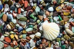 Shell con le piccole pietre di colore Fotografia Stock Libera da Diritti