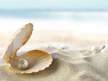 Shell con una perla Foto de archivo libre de regalías