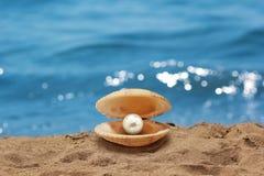 Shell con una perla Immagine Stock