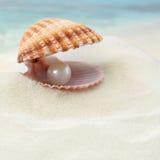 Shell con una perla Imagen de archivo libre de regalías