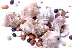 Shell and cooking beans. On white background Stock Photo