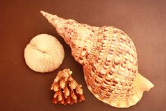 Shell and coral Royalty Free Stock Images