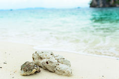 Shell and coral on beach Stock Photography