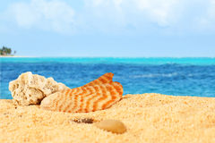Shell and coral on the beach Stock Photography