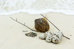 Shell ,coral, branch  and coconut on beach Stock Images