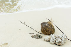 Shell ,coral, branch  and coconut on beach Stock Photography