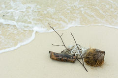 Shell ,coral, branch  and coconut on beach Royalty Free Stock Photo