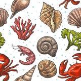 Shell, coral, caranguejo e camarão sem emenda do mar do teste padrão Ilustrações do vintage da gravura do vetor No fundo branco ilustração do vetor