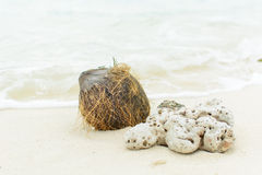 Shell ,coral and coconut on beach Royalty Free Stock Photos