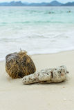 Shell ,coral and coconut on beach Stock Images