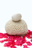 Shell and Coral Fossil Surrounded by petal. Fossil of an old coral and shell on the rose background Stock Photos