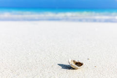 Shell, coral reef on sandy tropical beach in Maldives Royalty Free Stock Photos