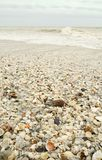 Shell Covered Beach Royalty Free Stock Image