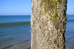 Shell covered trunk in the sea shore stock photos